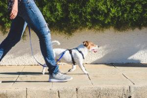 pet injured on someone's property Pittsburgh, PA